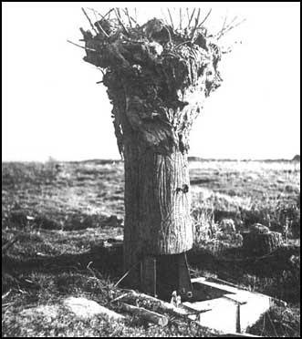 British fake tree used by snipers and spies.