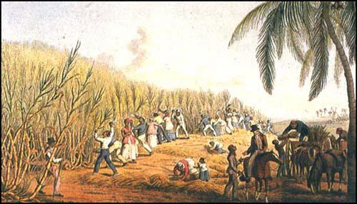 A sugar plantation in 1823